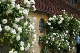 bar-white-garden
