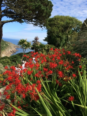 coverack-crocosmia
