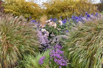 pettifers-grass-closeup