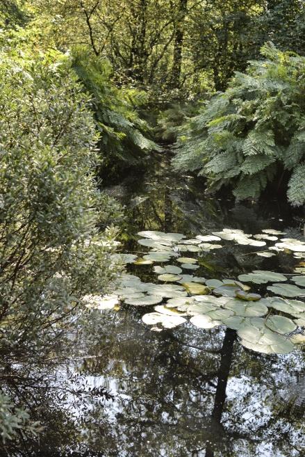 thijssenpark-felci