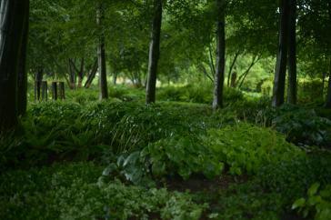 lazy-t-shady-garden