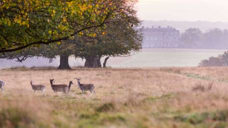 Chris_Lacey_Petworth_Park_Deer_WR